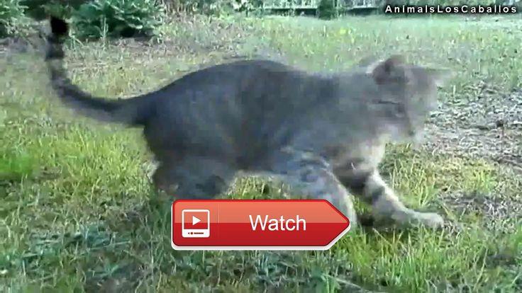 😸 Funny Crazy Cats Videos Top Funny Animals Video Funny Cats Videos 🐶 Top FUNNY animals Compilation Funny Cats and Dogs Videos Funny Crazy…