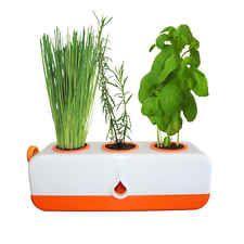 GP0321 - Orange Kitchen Herb Grower - Indoor Self Watering Pot - Moss Products