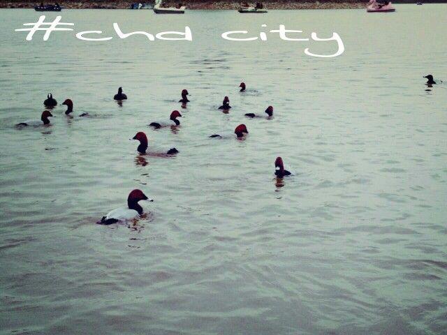 #chd city