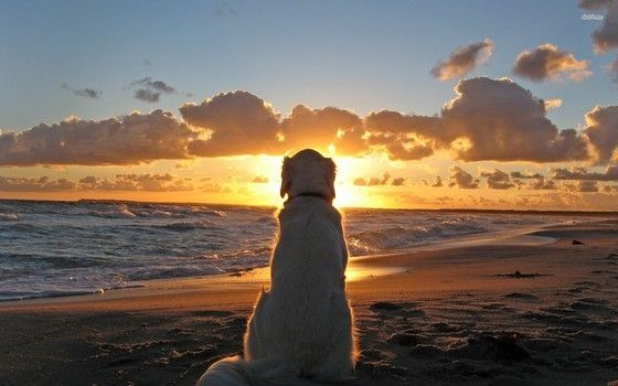 Dogs never die. They are sleeping in your heart. » DogHeirs | Where Dogs Are Family « Keywords: Rainbow Ridge, grief, passing, grieving