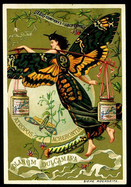 Liebig Butterfly Girl 3, 1890. German edition