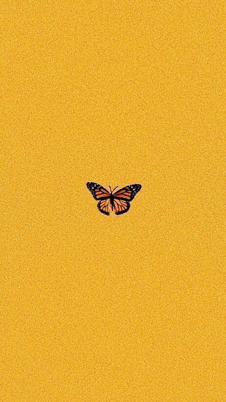 Yellow summer butterfly