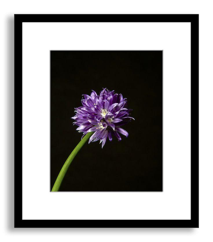 Purple Flower - photos.com by Getty Images - $147.20 - domino.com