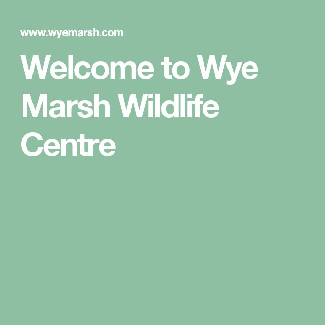 Welcome to Wye Marsh Wildlife Centre