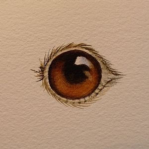 Painting Eyes   Step By Step Watercolor