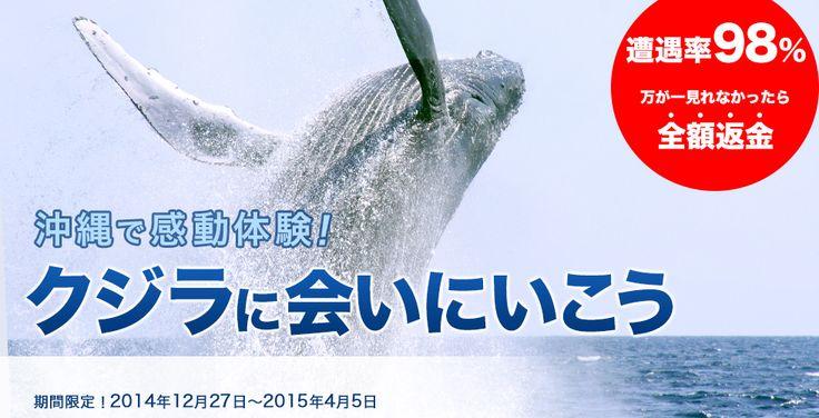 ホエールウォッチング 冬季限定 沖縄