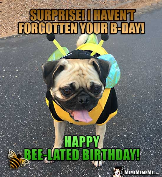 Pug In Bee Costume Says: Surprise! I Haven't Forgotten