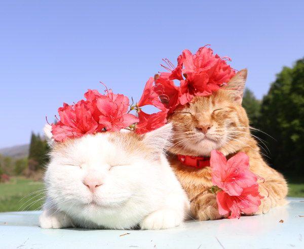 つつじ | のせ猫オフィシャルブログ Powered by Ameba