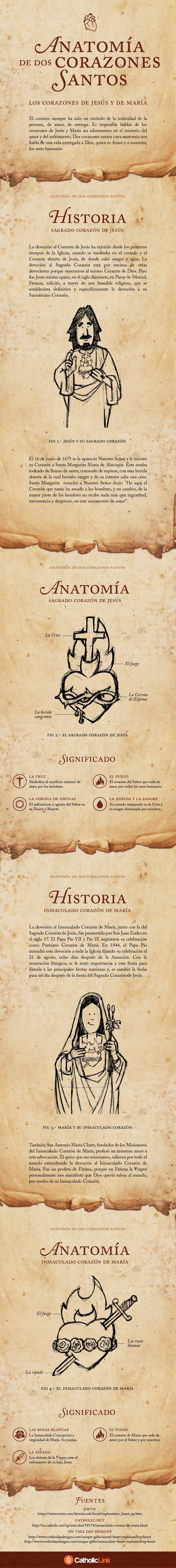 (Infografía) La anatomía de dos corazones santos.