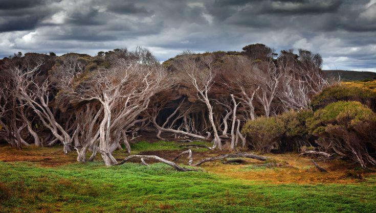 Marrawah, Tasmania, Australia.