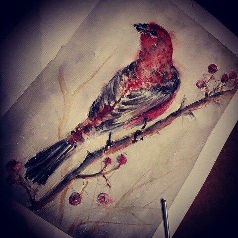 Uccello rosso   acquerello