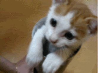 Kitty GIF<<why is this so cute?! <<< because it's a cat<<<duh like oh my gosh it's so cute!