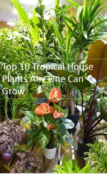 10 best tropical plants for growing indoors-Try growing these no-brainer plants in your indoor jungle.