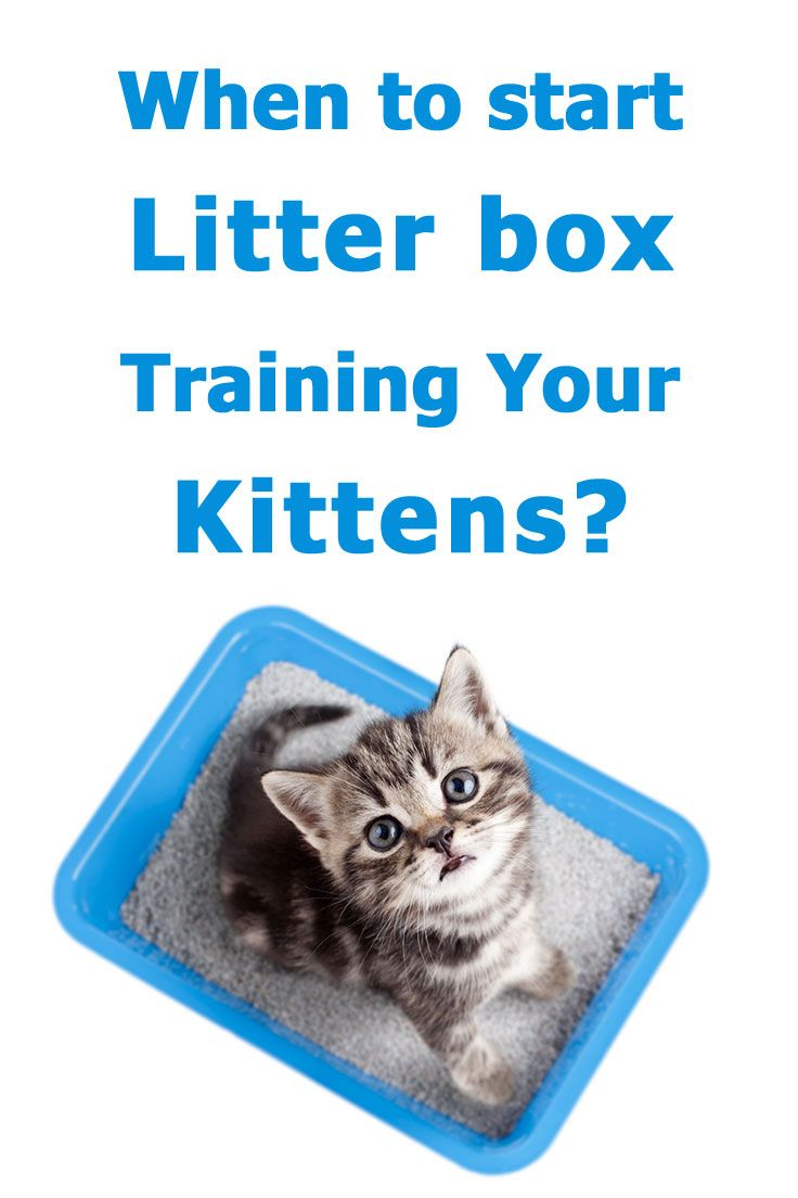 When To Start Litter Box Training Kittens The Complete Guide Litter Box Training Kittens Cat Training Litter Box Litter Box