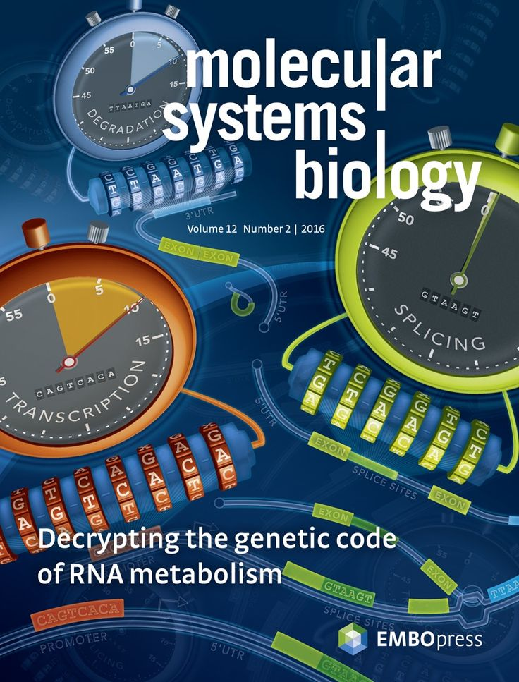About the Cover — February 01, 2016, 12 (2) | Molecular Systems Biology