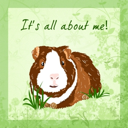 What's it all about? It's all about me, says the guinea pig!