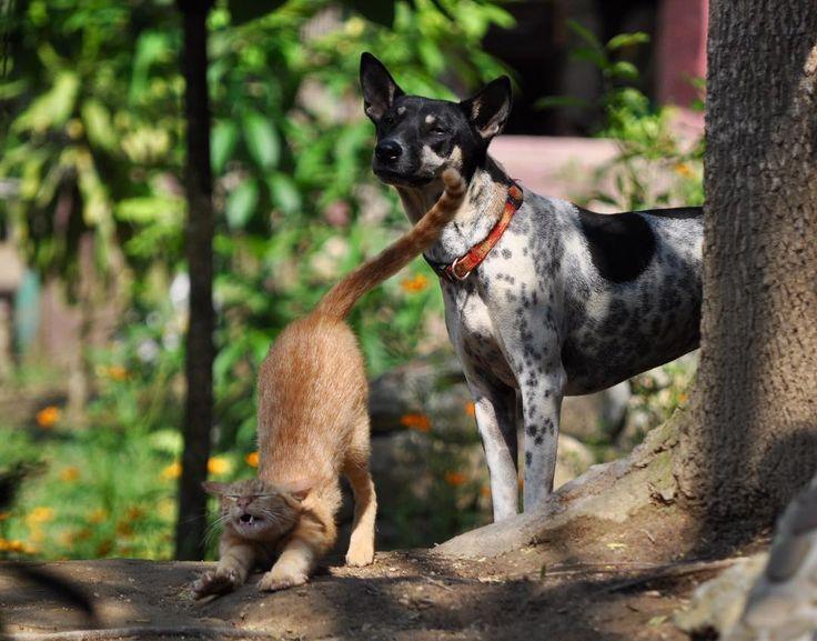 #asia #lao #luangprapang #butterflypark #friends #cat #dog #funny #wakewake #lazycat #curiousdog #easylife #happytime #animallover #instamoments #nikon