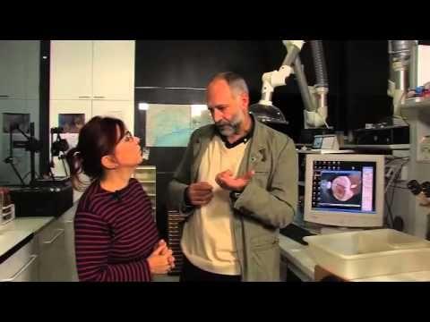 ▶ Pigafetta 500: Cosa sono le teredini? - YouTube