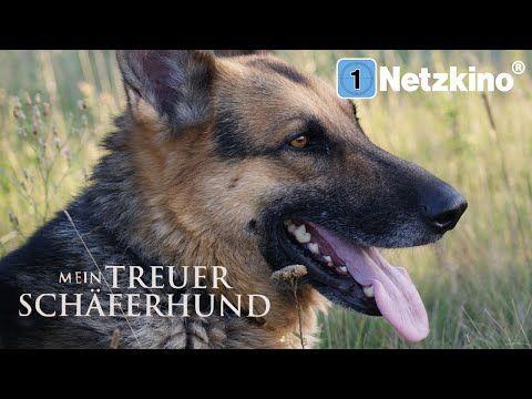 Mein treuer Schäferhund (Abenteuerfilm in voller Länge