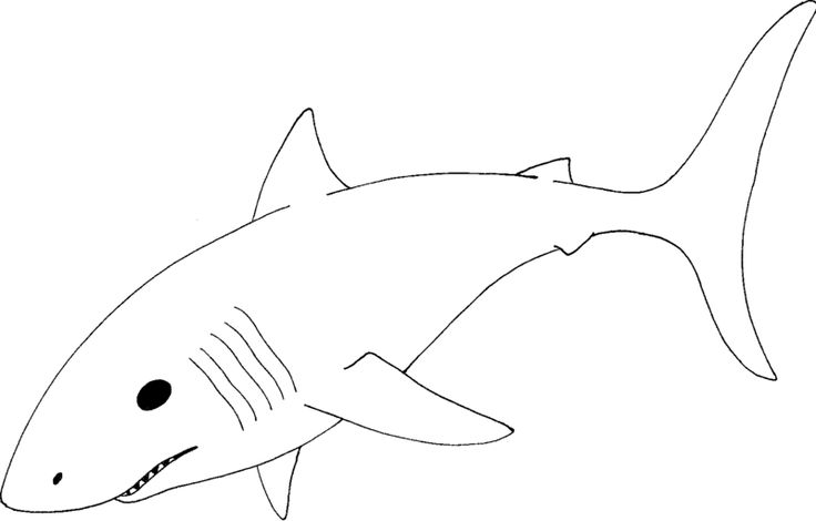 Great White Shark Coloring Pages2 800x511 Pixels