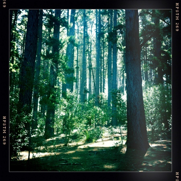 Love our Newlands Forest in Cape Town