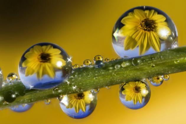 Dew Drops_10