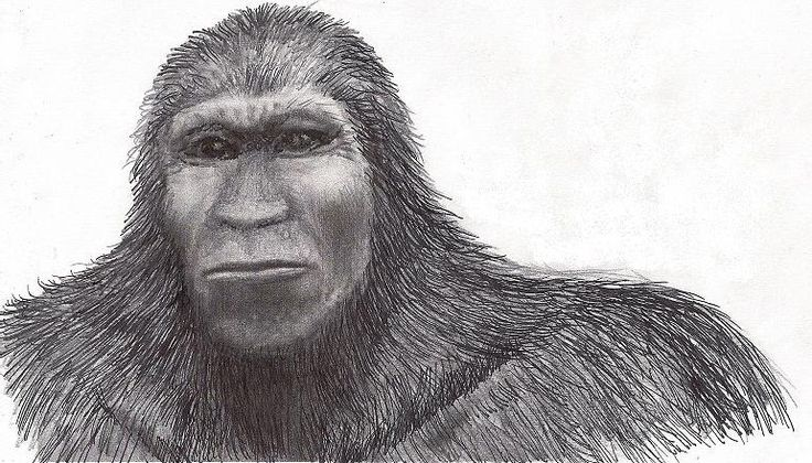 Pratt Bigfoot Harvey Drawings