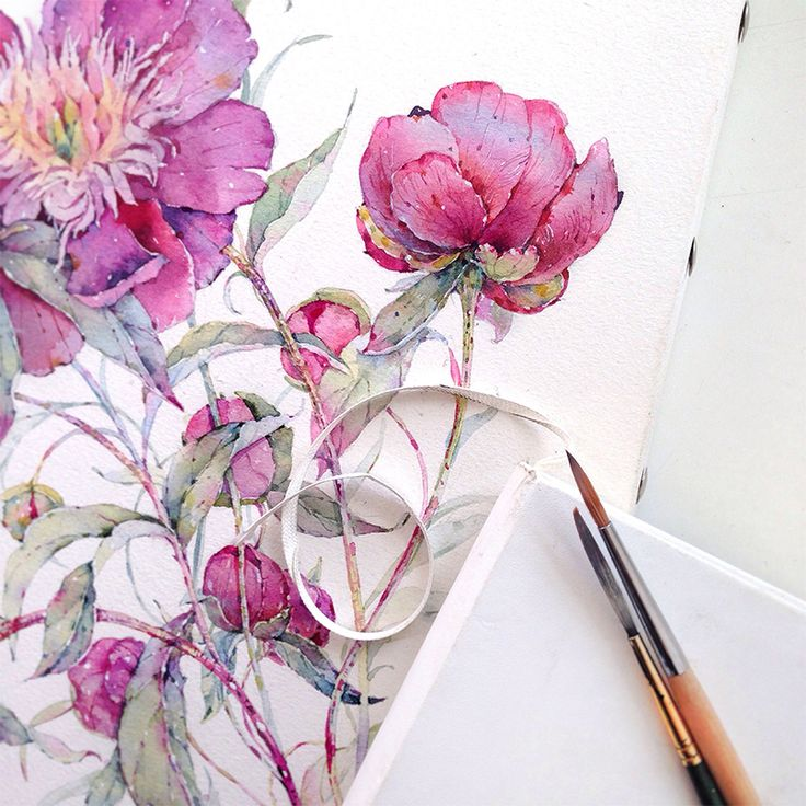 Peonies in watercolor on Behance//