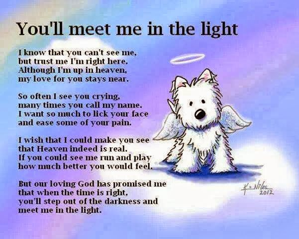 ill meet you in the light dog