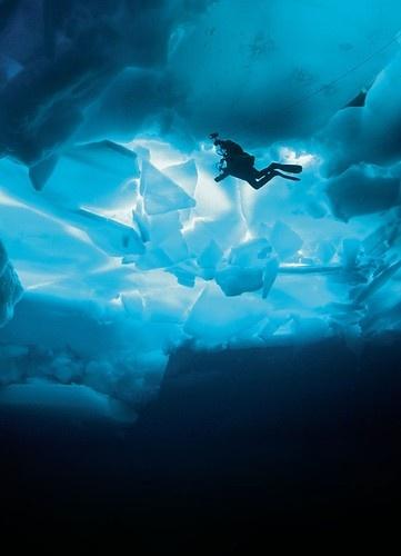 38 best images about deep sea diving on pinterest fish - Dive deep blue ...