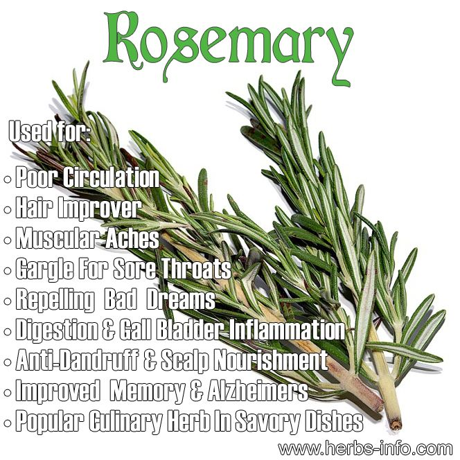 Uses And Benefits Of Rosemary