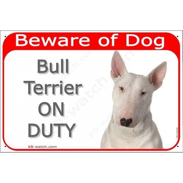White English Bull Terrier Head Gate
