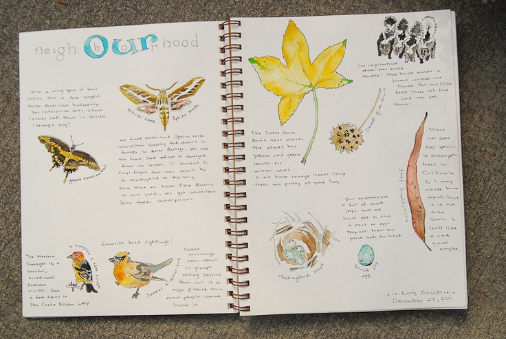 Living Charlotte Mason in California: Our Nature Journals Lately ((inspiring))