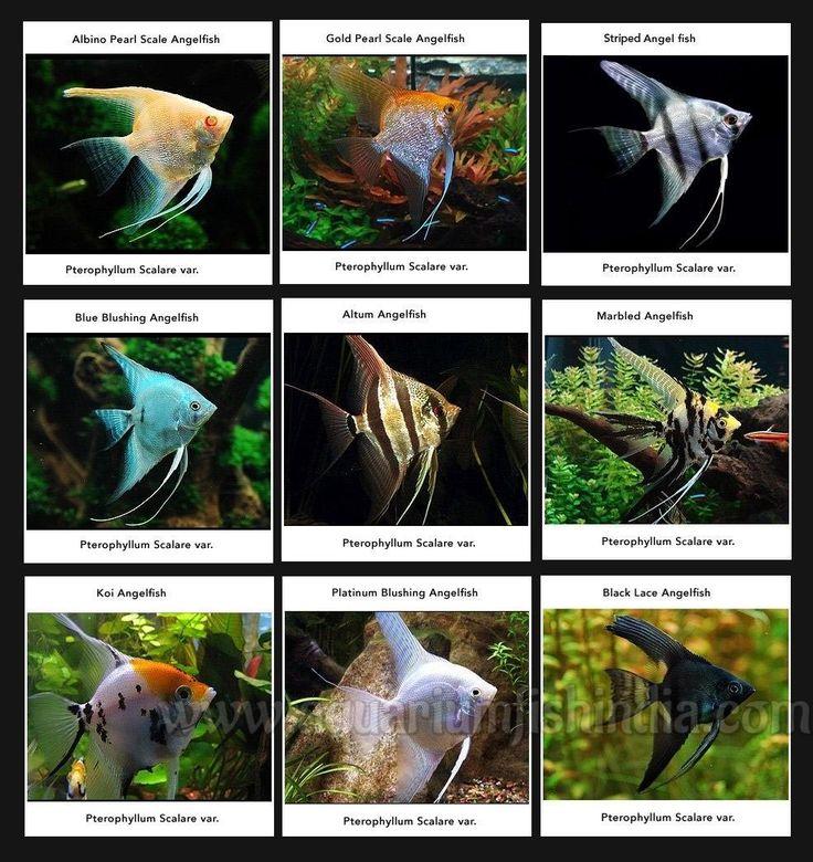 Marine Aquarium Fish Online