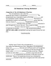 Cell Membrane Coloring Worksheet Answer Key - Synhoff