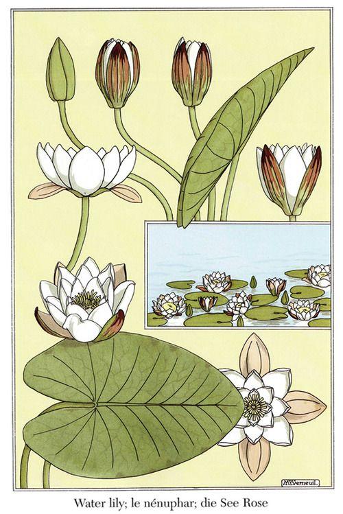 Art nouveau flowers and plants images for Art deco flowers
