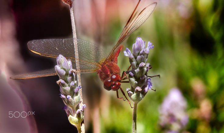 Dragonfly - null