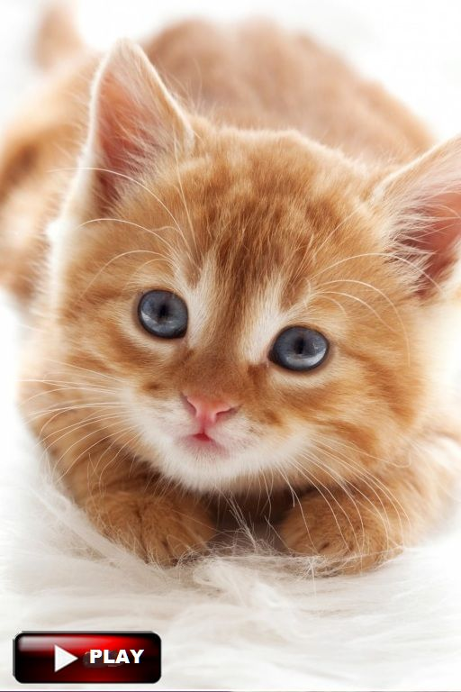 82 Best Images About Funny Cats Videos Vines 2016 On