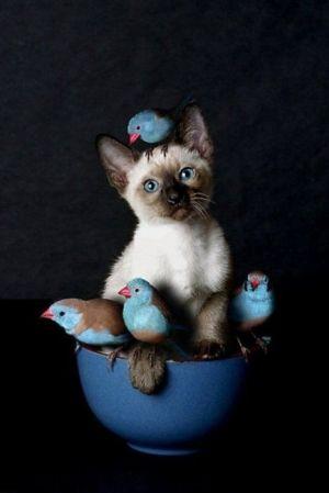 Kitty with bird friends | Animals by TTart