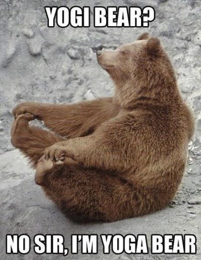 nice funny animals wallpaper No sir I'm yoga bear | Just ...