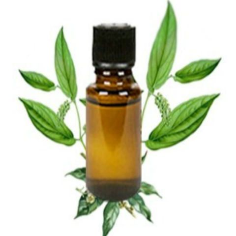 Camphor Oil Uses: stimulant & diaphoretic; antiseptic, disinfectant, insecticide & germicide; decongestant; anesthetic & nervous pacifier; anti-spasmodic; aphrodisiac; anti-neuralgic; anti-inflammatory & sedative; narcotic; carminative; anti-rheumatic