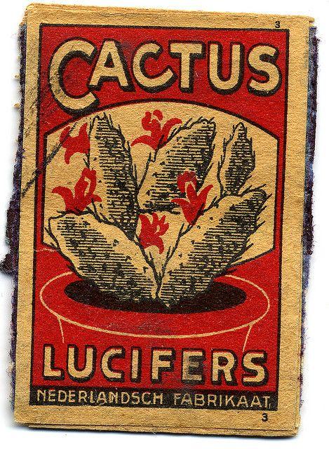 cactus lucifers - vintage match box