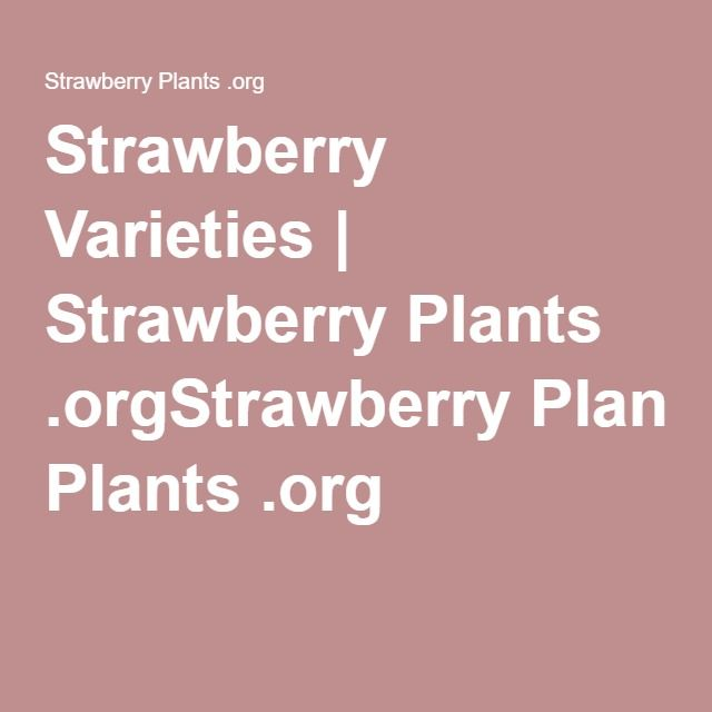 Strawberry Varieties | Strawberry Plants .orgStrawberry Plants .org