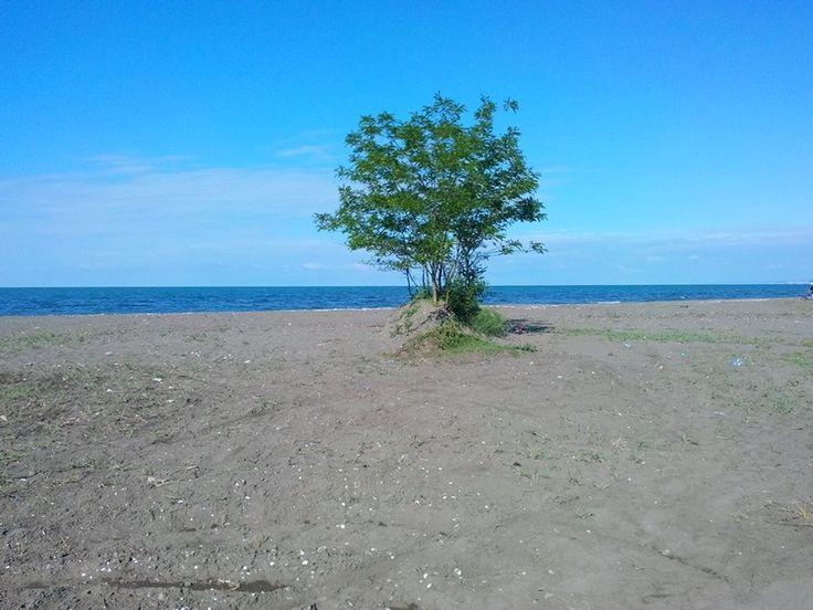 Deniz kenari