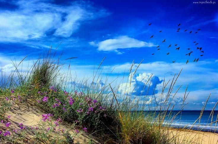 Редактирование фотографий: Пляж, море, песок, трава, цветы, птицы