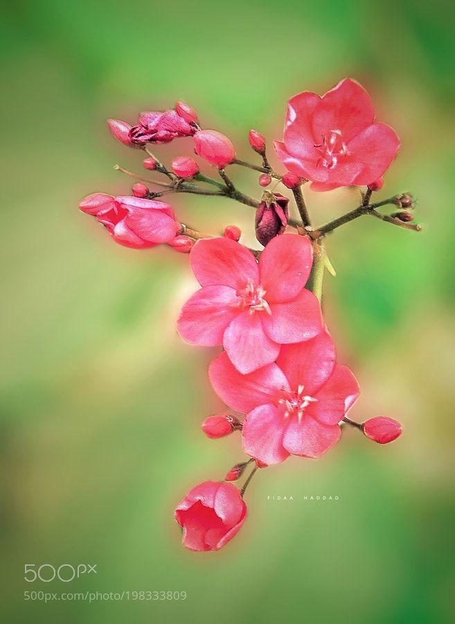 Fabulous Flowers by FidaaHaddad