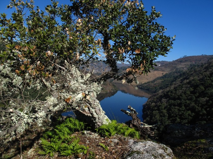 Hidden places in the Ribeira Sacra, province of Lugo.