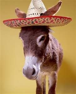 Every burro needs a sombrero- I really don't think they enjoy the humor. They just put up with our stupidity.