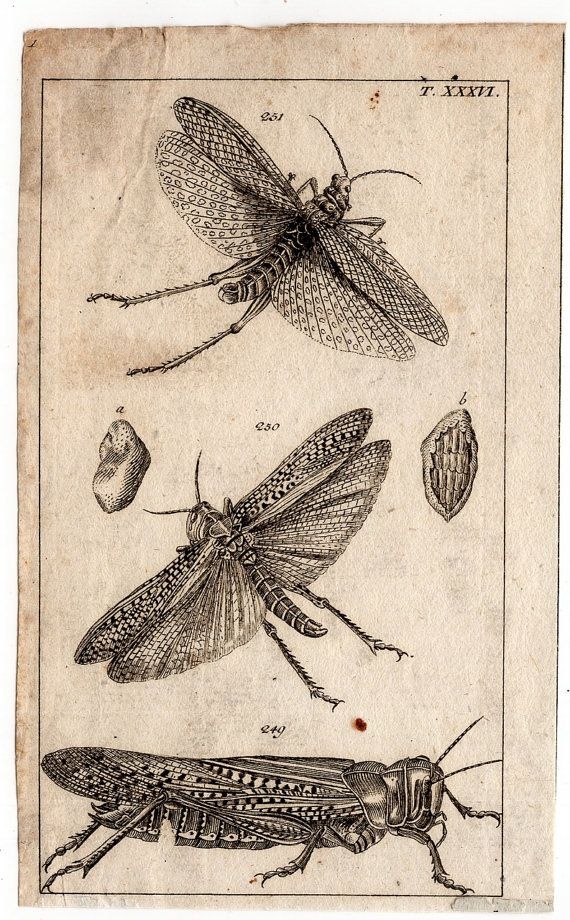 1809 insects & bugs original antique by antiqueprintstore on Etsy