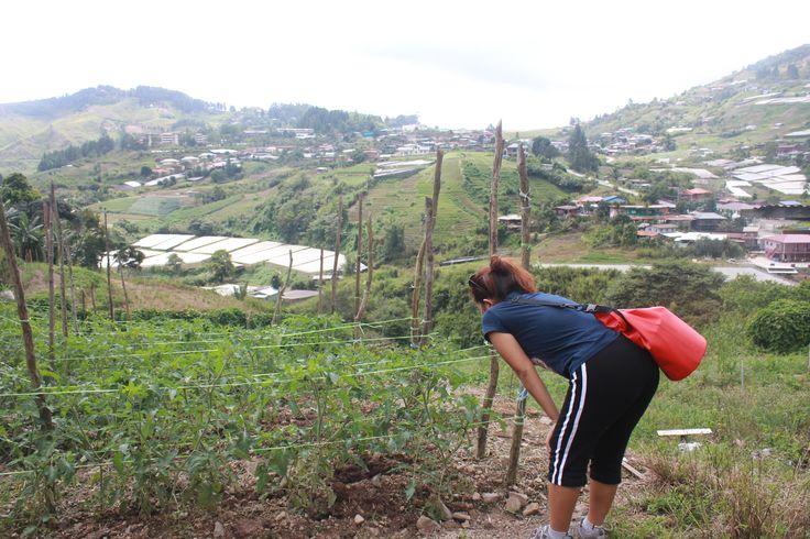 vegetations in Kundasang highland